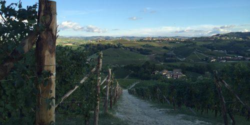 Sluttning på en vingård i Barolo Piemonte