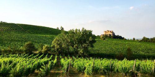 Företagsresa till Italien med Fouredo